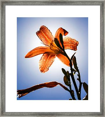 Transparency Framed Print by Aaron Aldrich