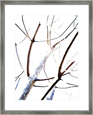 Transparency Composition Framed Print by Michel Mata