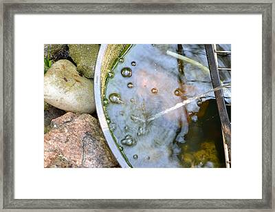 Transparency Framed Print by Don  Seago
