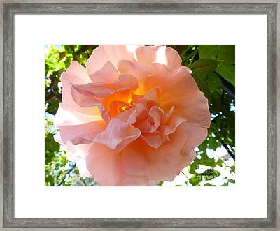 Transparent Beauty  Framed Print by Anat Gerards