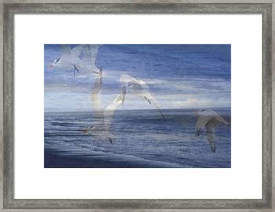 Transparent Flight Framed Print by James Chesnick