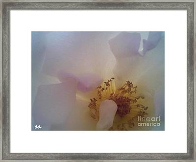 Framed Print featuring the photograph Transparent Whisper by Geri Glavis
