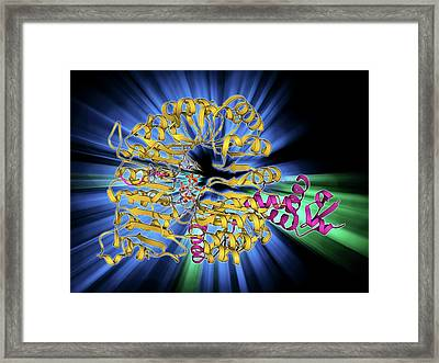 Transport Inhibitor Response 1 Protein Framed Print by Laguna Design