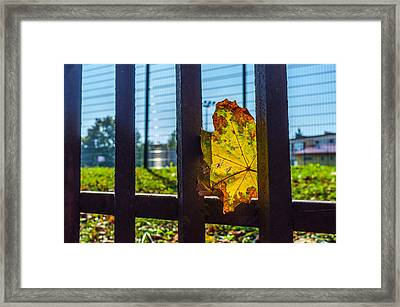 Trapped And Slowly Dying Framed Print