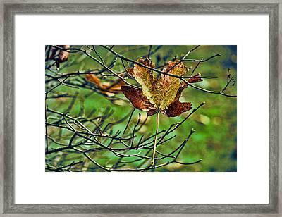 Trapped Framed Print by Bonnie Bruno