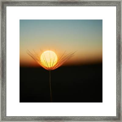 Trapped In A Downy Tuft Framed Print