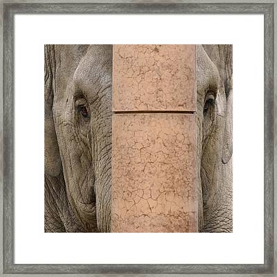 Trapped Framed Print by Inge Riis McDonald