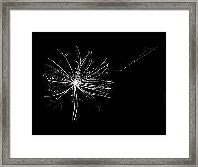 Trapped Framed Print by Leif Sohlman