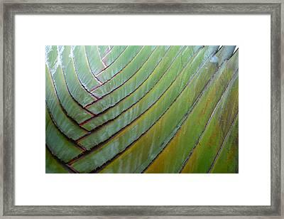 Traveler's Palm Design Framed Print