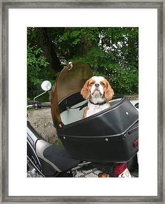 Traveling Dog Framed Print