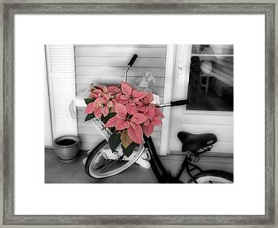 Traveling Poinsettia Framed Print