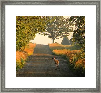 Traveling Framed Print by Sarah Boyd