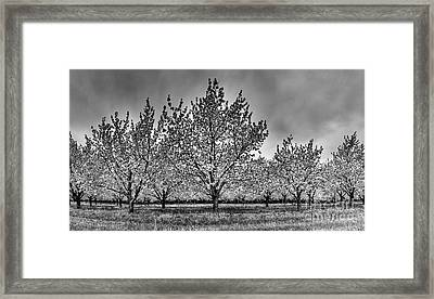 Traverse City Cherry Blossoms Framed Print by Twenty Two North Photography