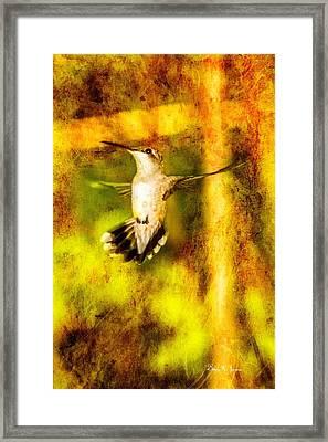 Hummingbird - In Flight - Treading Air Framed Print by Barry Jones