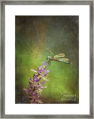 Treading Lightly Framed Print