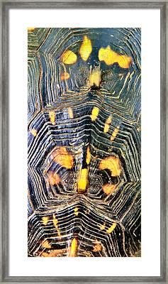 Treasure Map Framed Print by Art Dingo