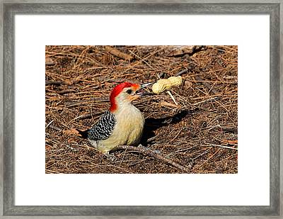 Treat Time Framed Print by HH Photography of Florida
