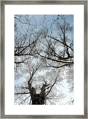 Framed Print featuring the photograph Tree 2 by Minnie Lippiatt