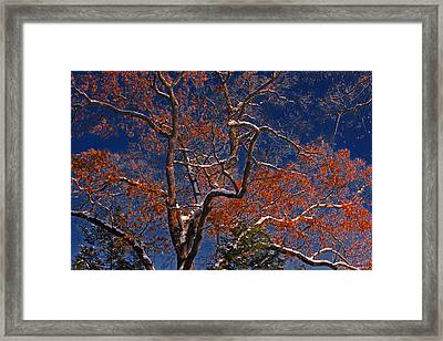 Framed Print featuring the photograph Tree Against Dark Sky by Andy Lawless