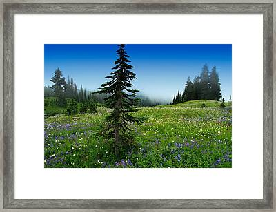 Tree Amongst Wildflowers Framed Print by Lynn Hopwood