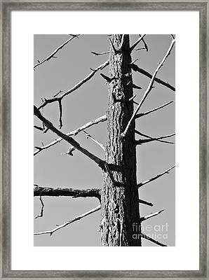 Tree Ancestor Framed Print