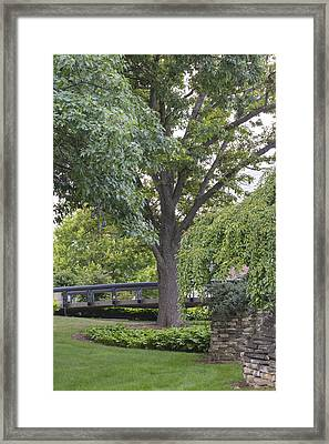 Tree And Bridge At Wharton Center Framed Print by John McGraw