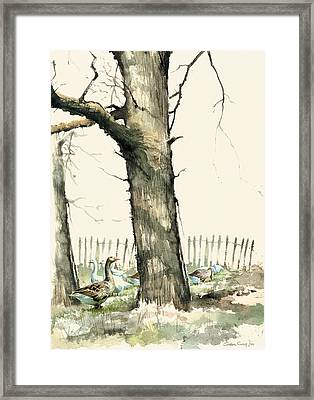 Tree And Geese Framed Print by Steve Crisp