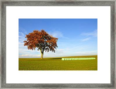 Tree And Hay Bales Framed Print by Aged Pixel