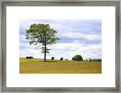 Tree And Horses Framed Print