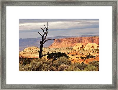 Tree And Mesa Framed Print by Marty Koch