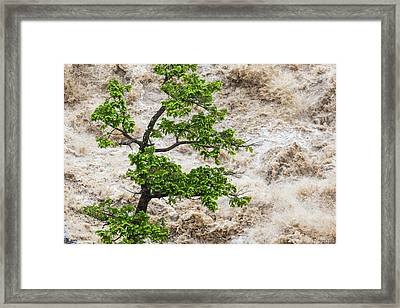 Tree And River In Flood, Banff Framed Print