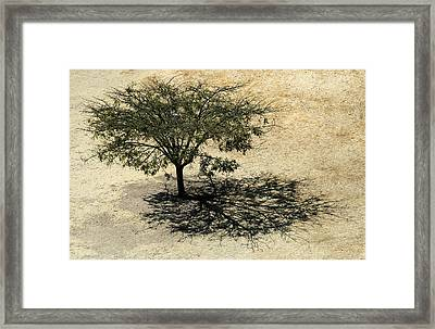 Tree And Shadow At Monte Alban Framed Print