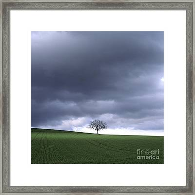 Tree And Stormy Sky  Framed Print