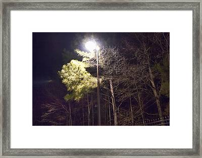Tree And Streetlight  Framed Print