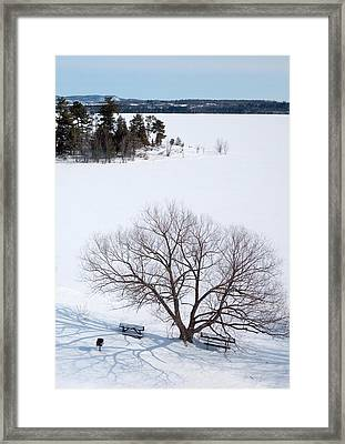 Tree And The Point In Winter Framed Print by Rob Huntley