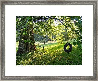 Tree And Tire Swing In Summer Framed Print
