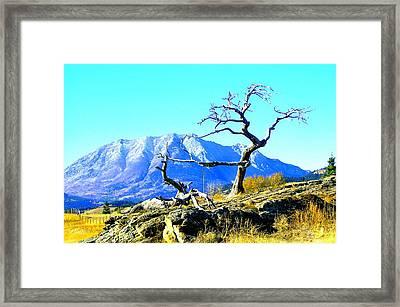 Tree Art By Nature Framed Print by Mavis Reid Nugent