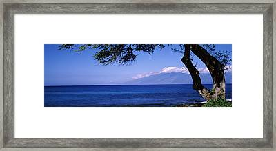 Tree At A Coast, Kapalua, Molokai Framed Print by Panoramic Images