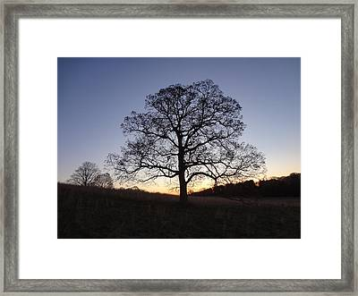 Framed Print featuring the photograph Tree At Dawn by Michael Porchik