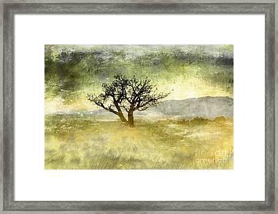 Tree At Dusk In Waikoloa 3 Framed Print