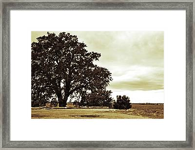 Tree At End Of Runway Framed Print