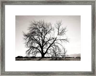 Tree At Harpers Lake Louisville 2 Framed Print