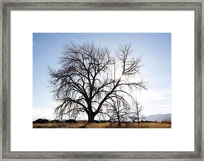 Tree At Harpers Lake Louisville Framed Print