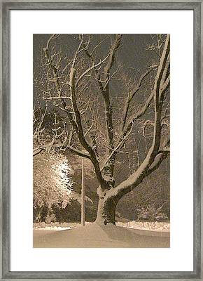 Tree At Night Framed Print