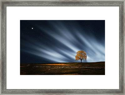 Tree At Night With Stars Framed Print