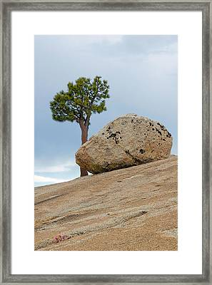 Tree At Olmsted Point Yosemite National Park California Framed Print by Christine Till