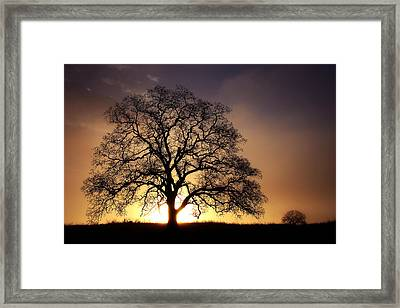 Tree At Sunrise In The Fog Framed Print by Robert Woodward