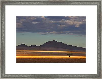 Tree At Sunrise Namibrand Nature Framed Print by Theo Allofs