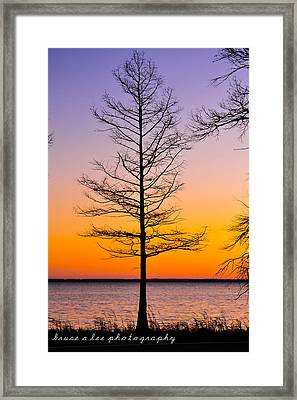 Tree At Sunset Framed Print by Bruce A Lee