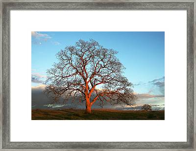 Tree At Sunset Clouds Moon Framed Print by Robert Woodward